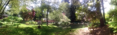 Image_of_pond_from_front_yard..jpg