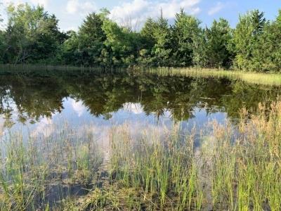 pond1 (2).jpg