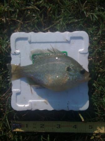 Fish_09-15-2010.JPG