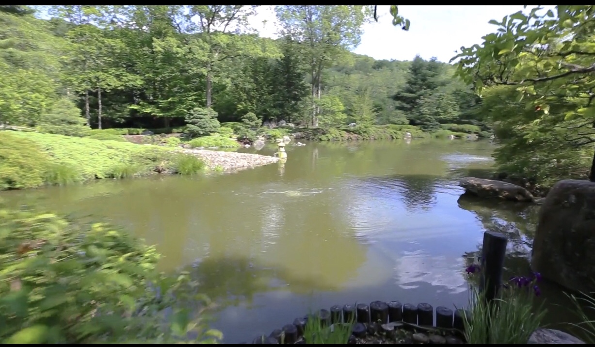 Acquiring 1 2 acre green koi pond in need of tlc for Koi pond forum