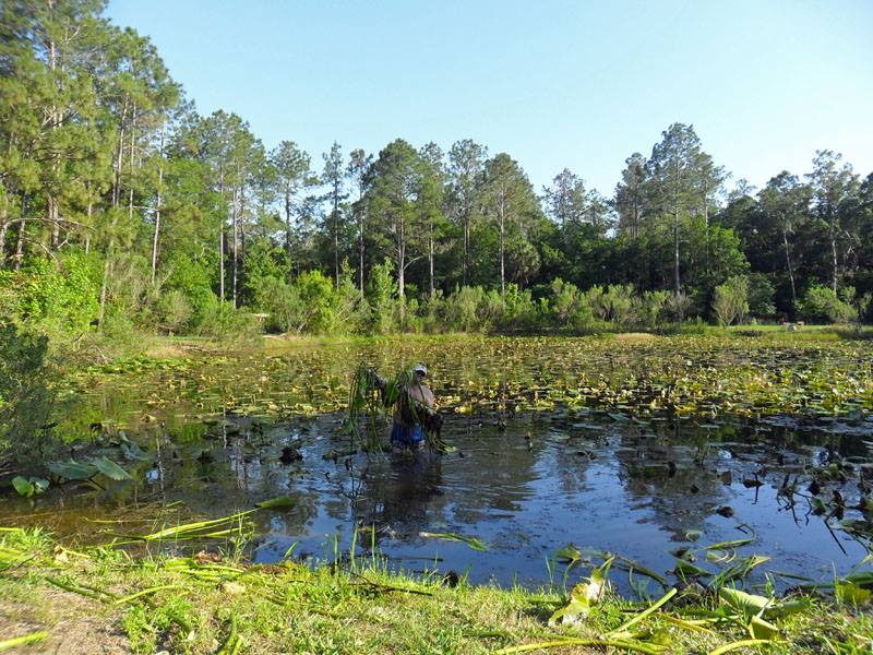 New pond owner pond management evaluating and for Fish pond management